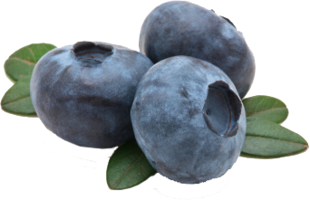 Blueberries _03